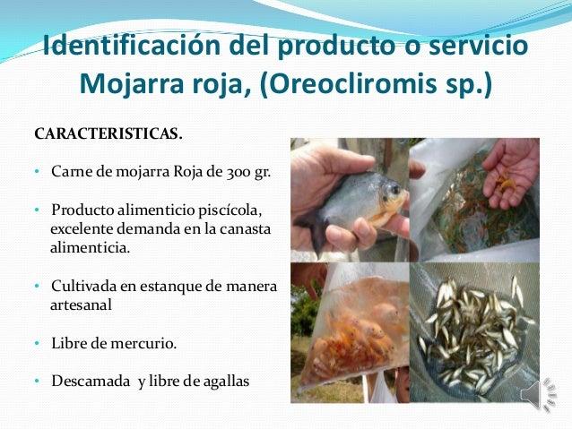 Sustentacion proyecto final 40 for Proyecto de piscicultura mojarra roja