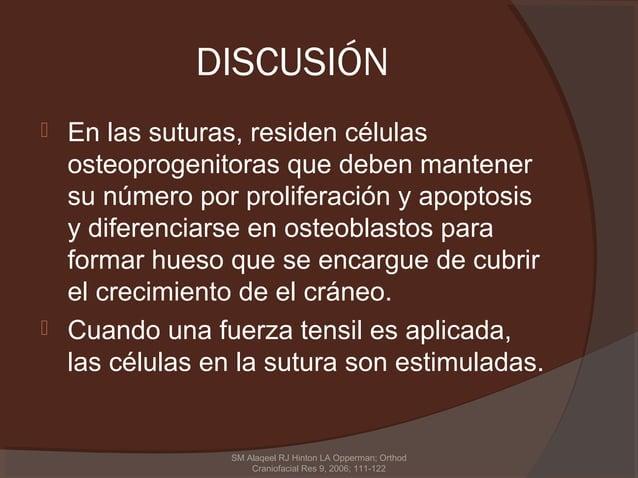 DISCUSIÓN En las suturas, residen células  osteoprogenitoras que deben mantener  su número por proliferación y apoptosis ...