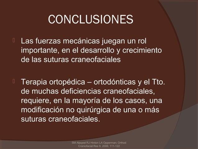 CONCLUSIONES   Las fuerzas mecánicas juegan un rol    importante, en el desarrollo y crecimiento    de las suturas craneo...