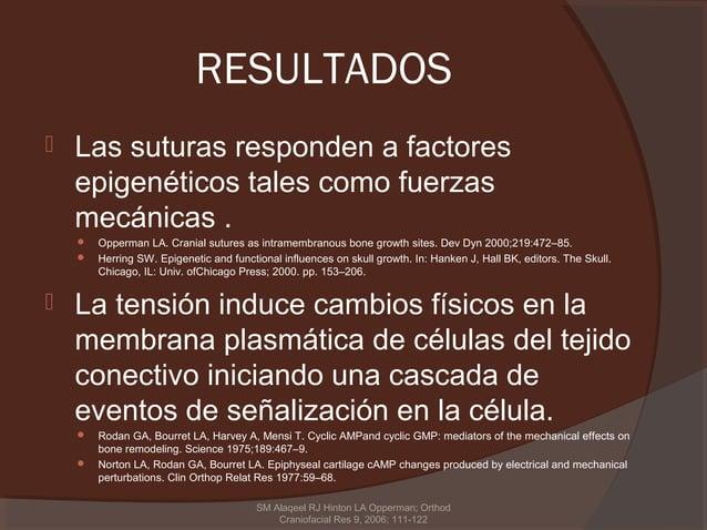 RESULTADOS   Las suturas responden a factores    epigenéticos tales como fuerzas    mecánicas .       Opperman LA. Crani...