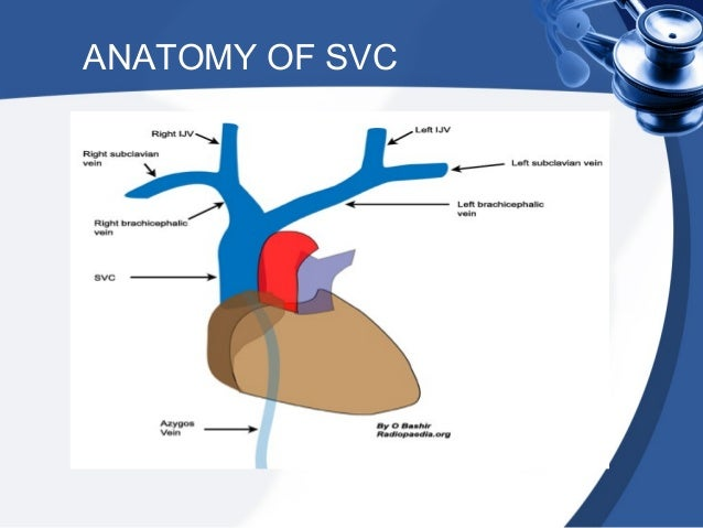 superior vena cava syndrome & pancoast syndrome, Human Body