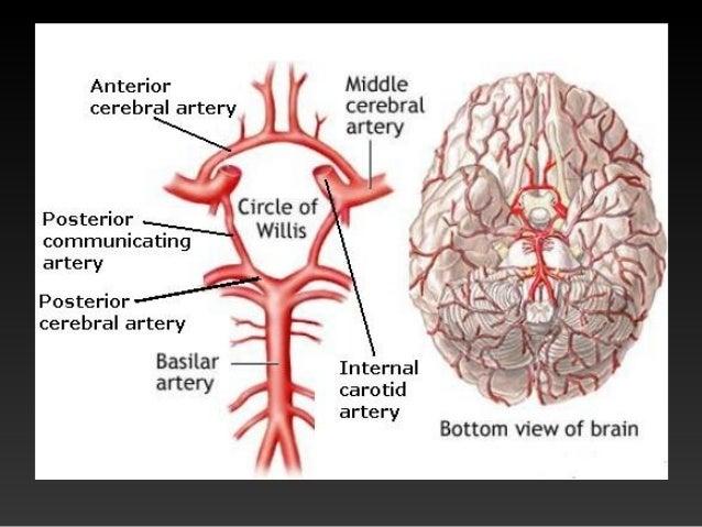MOŽDANA KRVARENJA • Centralizacija krvotoka – mozak vitalan organ, ne smije ostati bez kisika. • Moždana krvarnje dijele s...