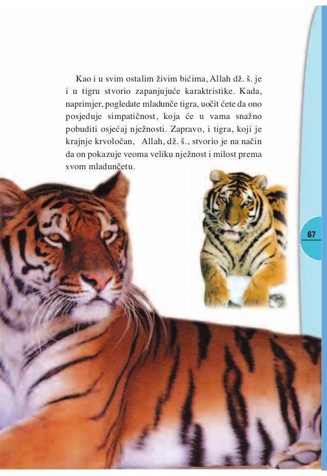 Online upoznavanje tigar