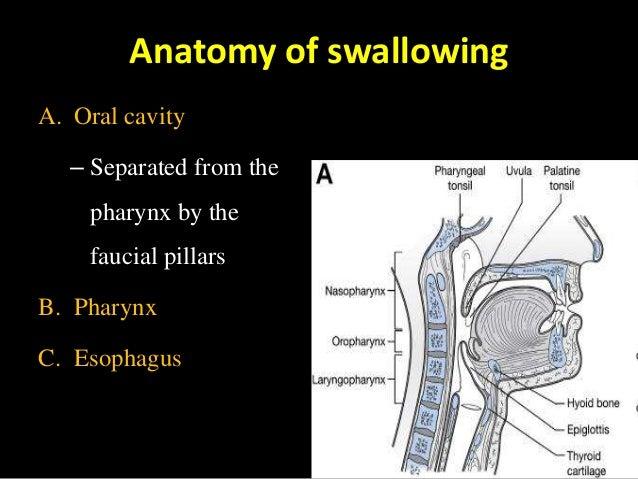 Penetration Laryngeal Aditus