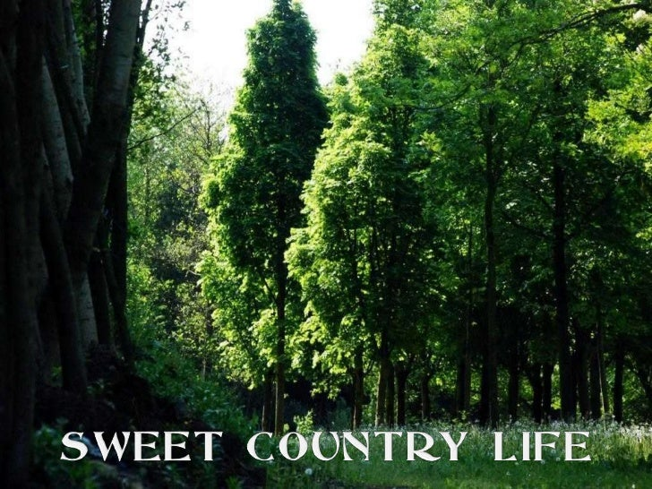 SWEET COUNTRY LIFE<br />