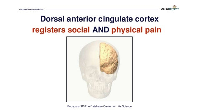 GROWING YOUR HAPPINESS registers social AND physical pain Bodyparts 3D/The Database Center for Life Science Dorsal anterio...