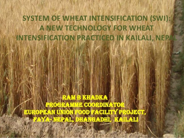 SYSTEM OF WHEAT INTENSIFICATION (SWI):      A NEW TECHNOLOGY FOR WHEATINTENSIFICATION PRACTICED IN KAILALI, NEPAL         ...