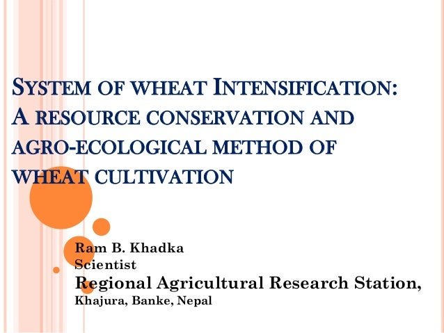 SYSTEM OF WHEAT INTENSIFICATION: A RESOURCE CONSERVATION AND AGRO-ECOLOGICAL METHOD OF WHEAT CULTIVATION Ram B. Khadka Sci...