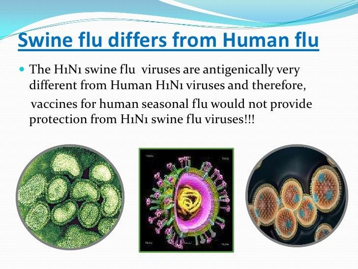 Natural Swine Flu Treatment