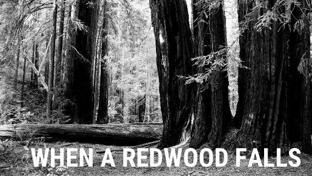 WHEN A REDWOOD FALLS