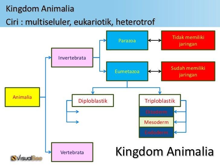 Image of: Peta Konsep Kingdom Animaliaciri Multiseluler Eukariotik Heterotrof Tidak Memiliki Parazoa Jaringan Invertebrata Sudah Memiliki Eumetazoa Jaringan Animalia Slideshare Klasifikasi Makhluk Hidup Kingdom