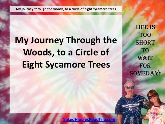 My journey through the woods, to a circle of eight sycamore trees                                                         ...