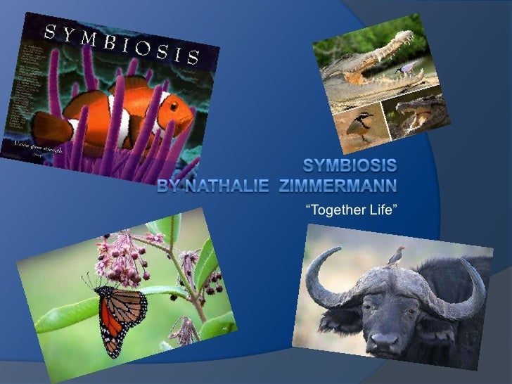 """Together Life""<br />SymbiosisBy Nathalie  zimmermann<br />"