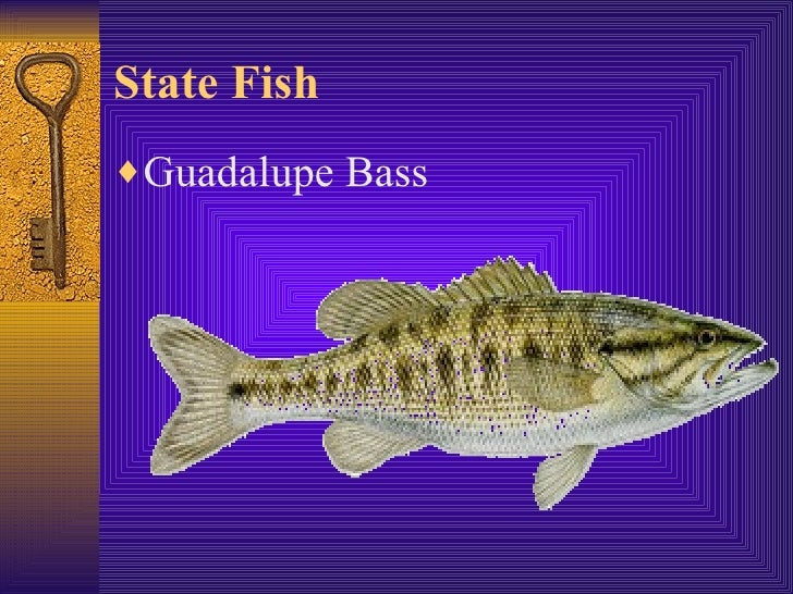 Texas symbols larocque for Idaho out of state fishing license