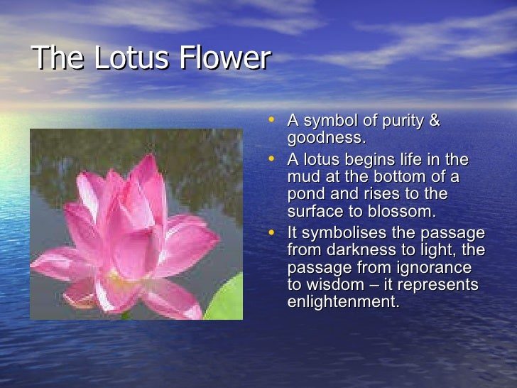 Lotus Flower Meaning Buddhism