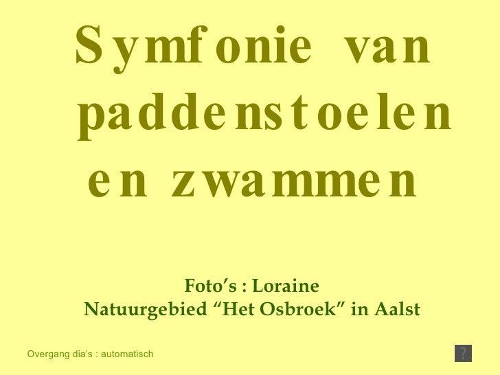 """Foto's : Loraine Natuurgebied """"Het Osbroek"""" in Aalst Overgang dia's : automatisch Symfonie van paddenstoelen en zwammen"""