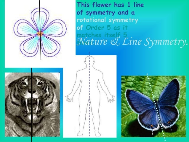 Drawing Lines Of Symmetry Worksheets : Symmetry g cb