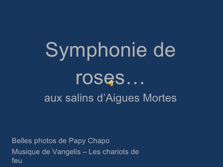 Symphonie de roses… aux salins d'Aigues Mortes Belles photos de Papy Chapo Musique de Vangelis – Les chariots de feu