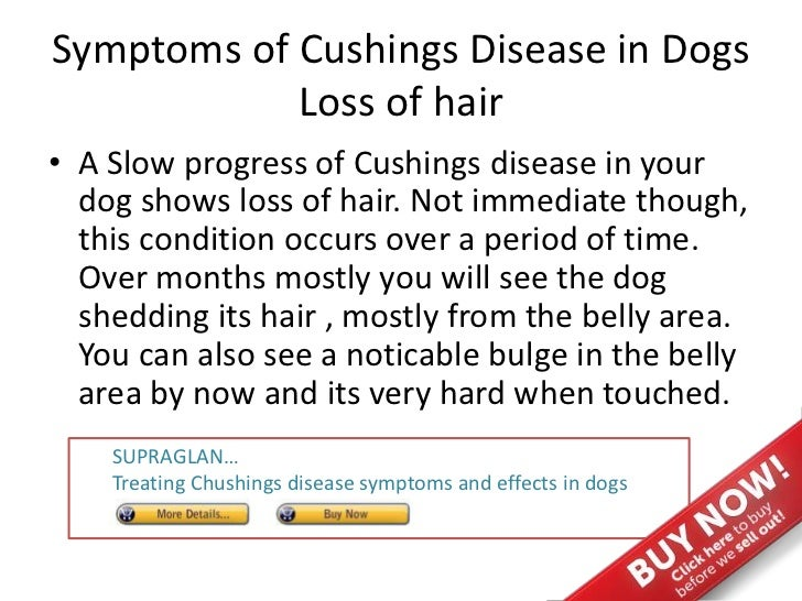What Are The Symptoms Of Cushing S Disease In Dogs