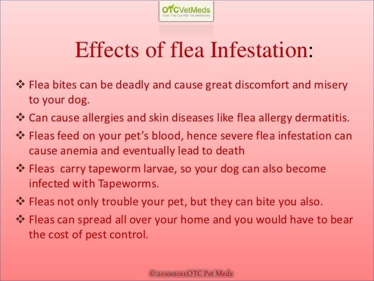 signs of fleas