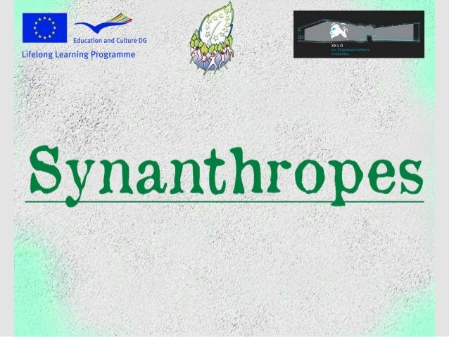 Synanthropes   comenius project natural treasures of europe