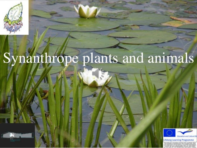 Synanthrope plants and animals