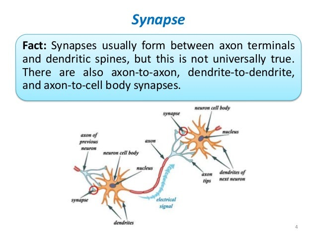 Electrical Vs Chemical Synaptic Transmission
