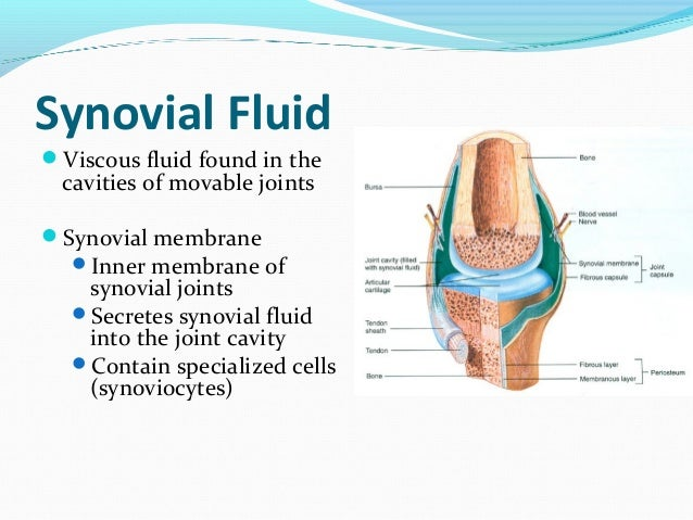 a synovial membrane secretes synovial fluid The inner membrane of synovial joints is called the synovial membrane and secretes synovial fluid into the joint cavity the fluid contains hyaluronic acid secreted by fibroblast-like cells in the synovial membrane and interstitial fluid filtered from the blood plasma.