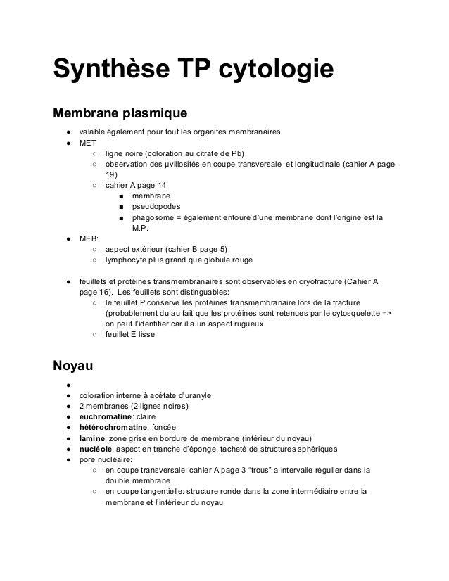 Synthèse TP cytologieMembrane plasmique ●   valable également pour tout les organites membranaires ●   MET         ○ ligne...