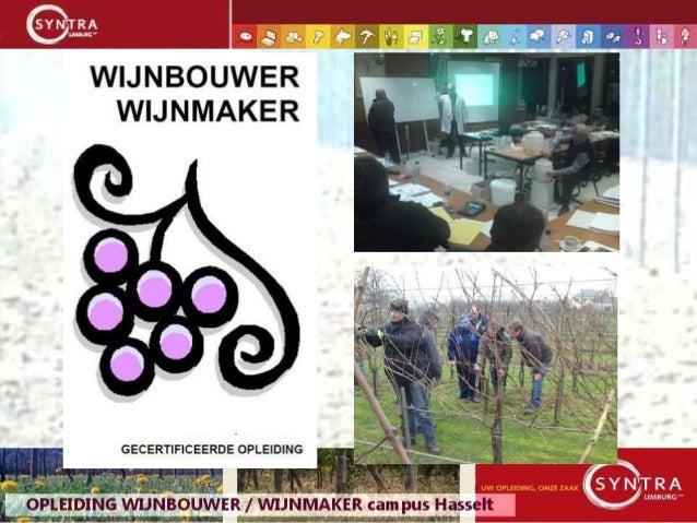 Wijnbouwer -  wijnmaker  2014 -2016