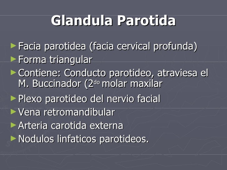 Glandula Parotida <ul><li>Facia parotidea (facia cervical profunda) </li></ul><ul><li>Forma triangular </li></ul><ul><li>C...