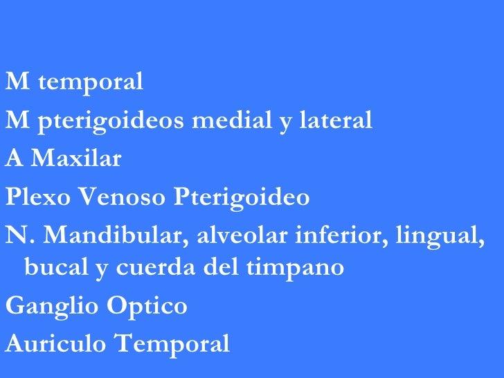 <ul><li>M temporal </li></ul><ul><li>M pterigoideos medial y lateral </li></ul><ul><li>A Maxilar </li></ul><ul><li>Plexo V...