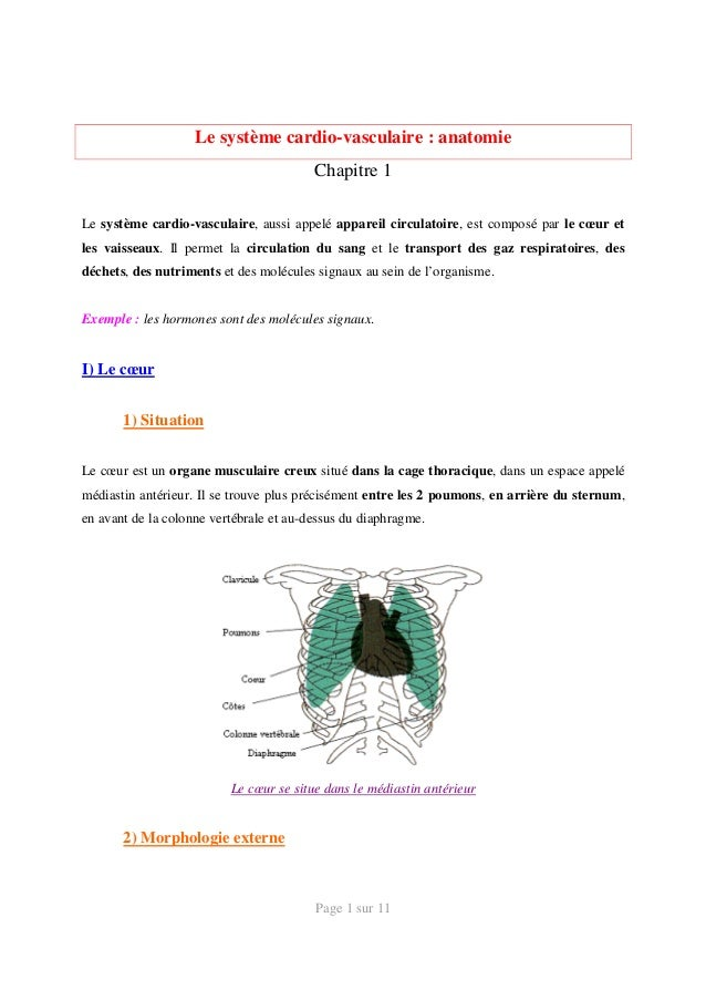 Systeme cardiovasculaire-anatomie