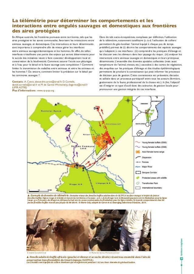 La télémétrie pour déterminer les comportements et les interactions entre ongulés sauvages et domestiques aux frontières d...