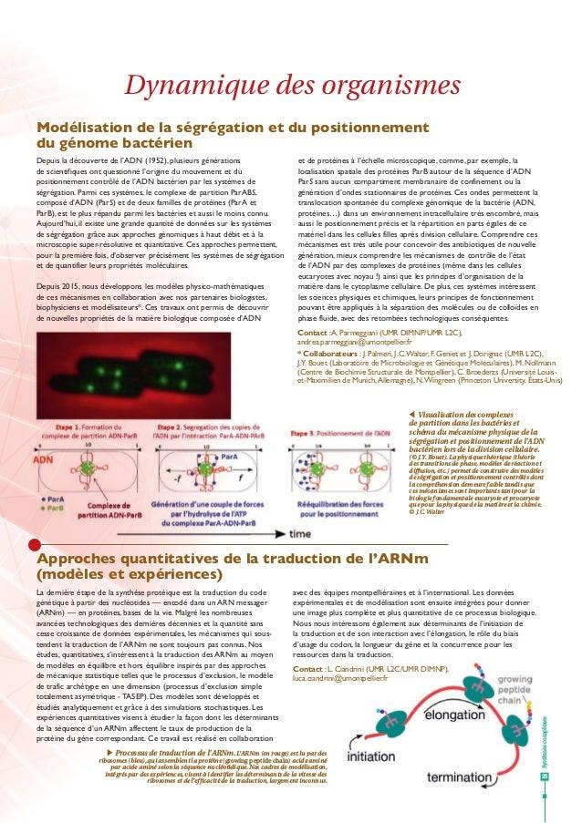 Systèmescomplexes 25 Dynamique des organismes Modélisation de la ségrégation et du positionnement du génome bactérien Appr...