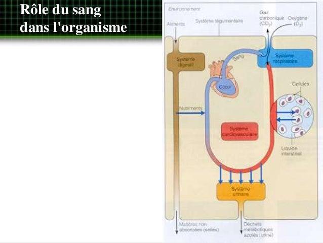 Système cardivasculaire Slide 2