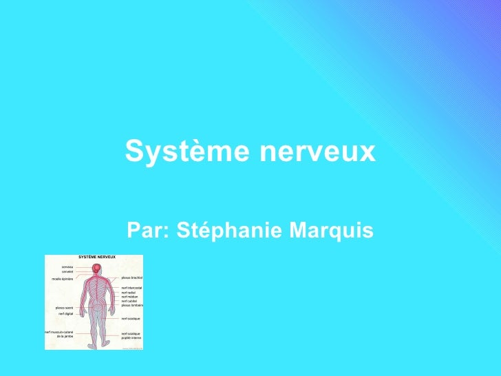 Système nerveux Par: Stéphanie Marquis