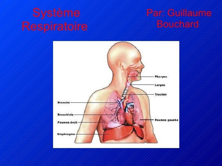 Système Respiratoire   Par: Guillaume Bouchard