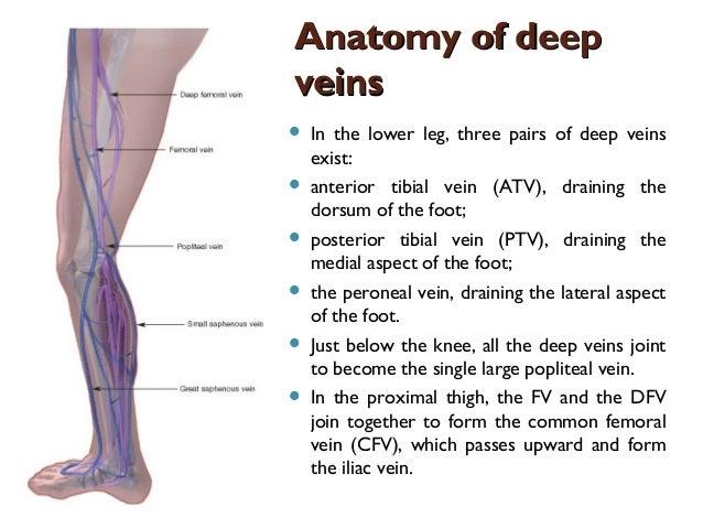 Deep vein thrombosis maria