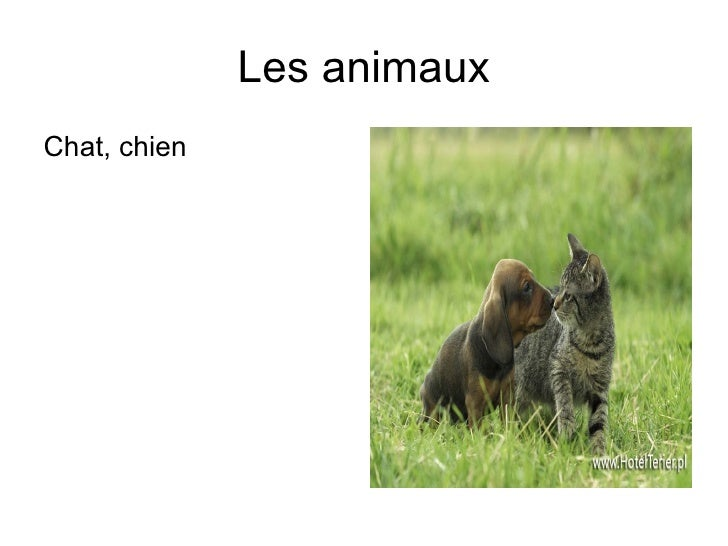 Les animaux <ul><li>Chat, chien </li></ul>