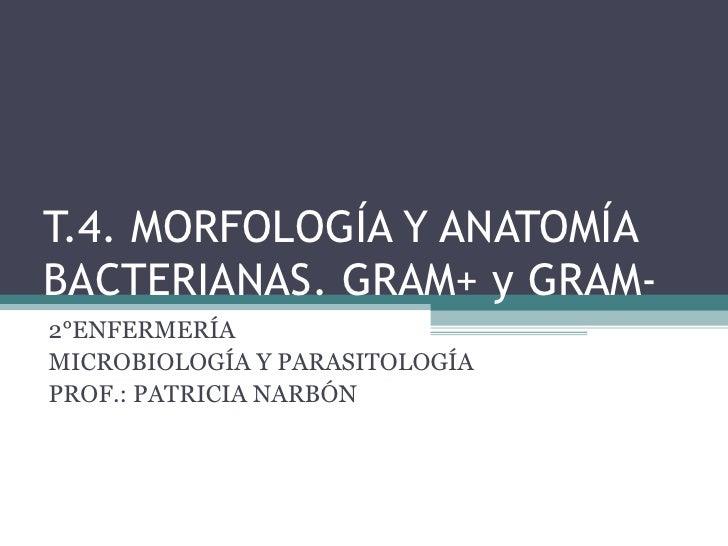 T.4. MORFOLOGÍA Y ANATOMÍABACTERIANAS. GRAM+ y GRAM-2°ENFERMERÍAMICROBIOLOGÍA Y PARASITOLOGÍAPROF.: PATRICIA NARBÓN