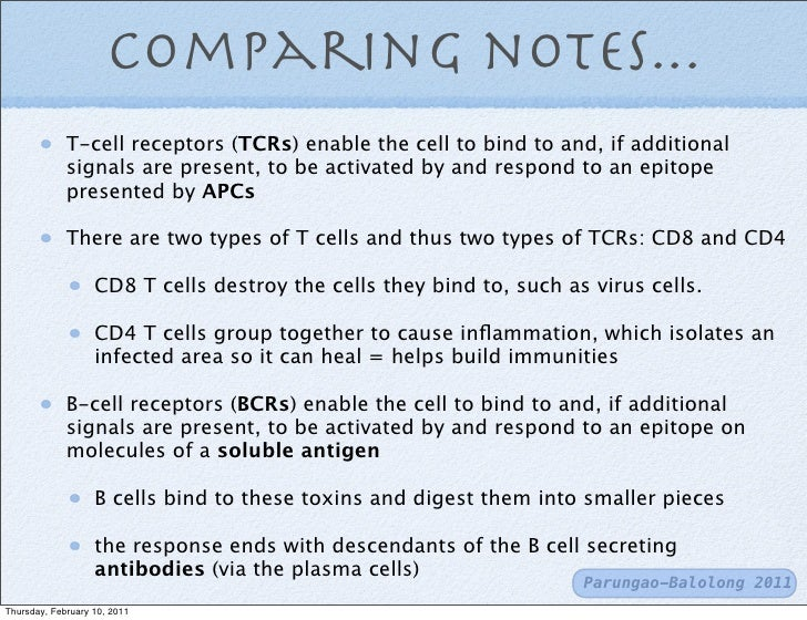 t cells and b cells
