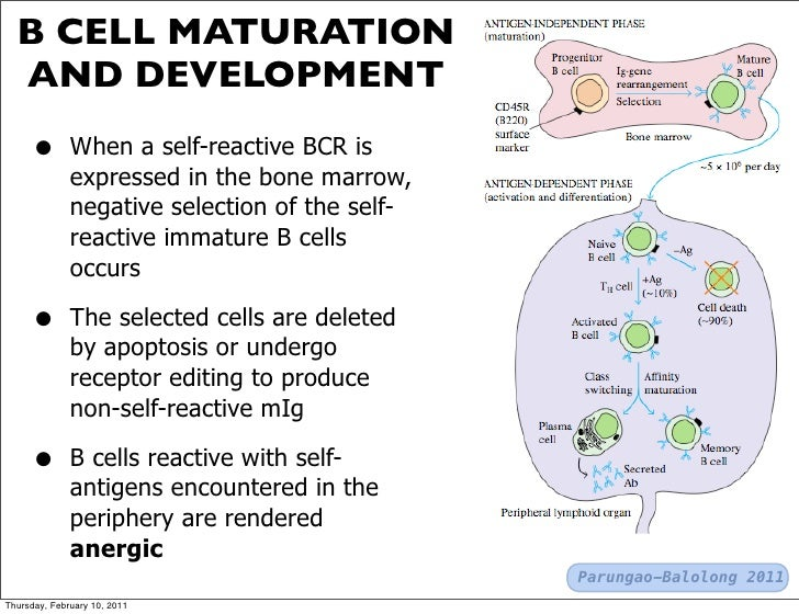 B CELL MATURATION EPUB DOWNLOAD