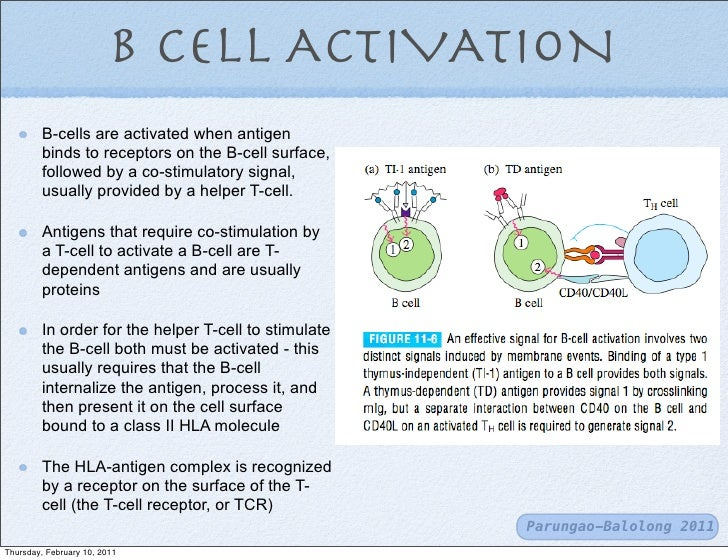 T cells and b-cells