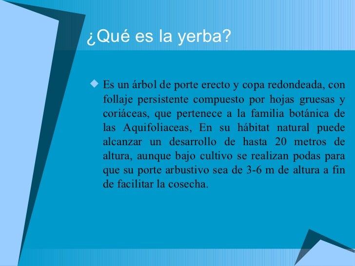 Circuito Yerba Mate : Circuito productivo de la yerba mate