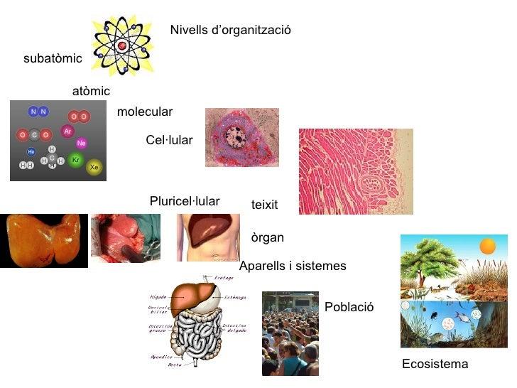 Nivells d'organització atòmic subatòmic molecular Cel·lular Pluricel·lular teixit òrgan Aparells i sistemes Ecosistema  Po...