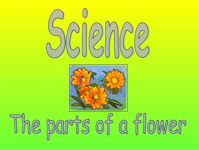 •We will learn to label the parts of aplant and flower.•We will learn that plants produceflowers which have male and femal...