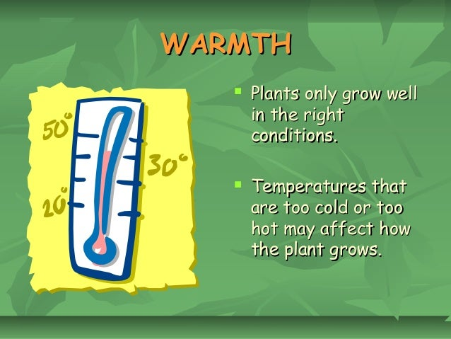 T06 what do plants need to grow
