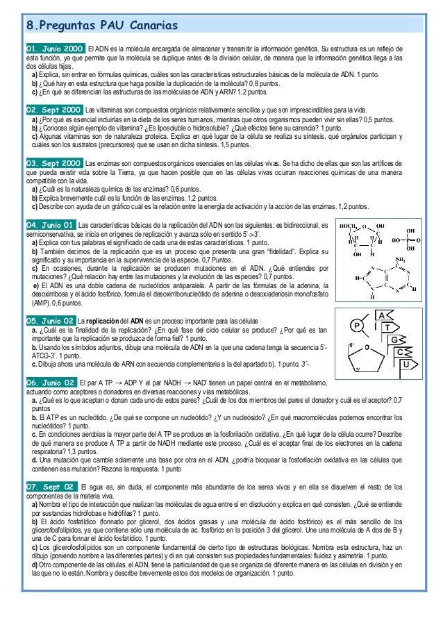 T 06 ácidos nucleicos 17 18