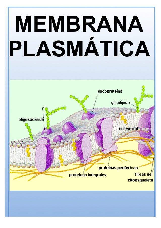 T 08 Membrana Plasmática Y Pared Celular 17 18